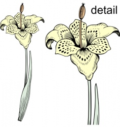 tiger flower vector image vector image