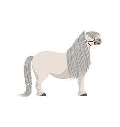 white pony with grey mane thoroughbred horse vector image vector image