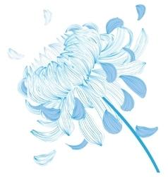 Blue chrysanthemum flower vector image