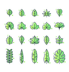 Different types leaf icon set vector
