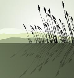 Landscape view Reeds vector