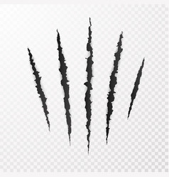Monster claws claw scratch mark animal scratch vector