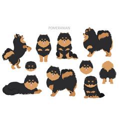 Pomeranian german spitz clipart different poses vector