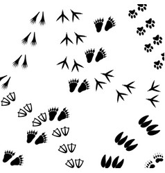 Traces the background vector