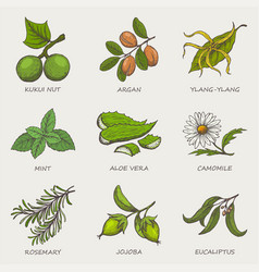 set of herbs and plants hand drawn icons that are vector image vector image