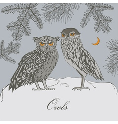 Owls in forest vector