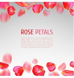 rose petals border vector image