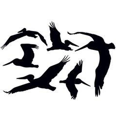 Flying Pelicans vector image vector image
