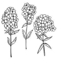 Hand drawn garden flowers on white background vector