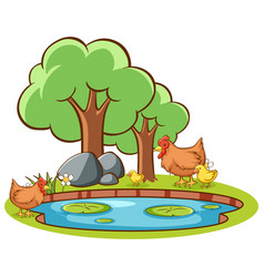 Isolated picture chicken pond vector