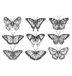 Set isolated sketch butterfly or moth vector