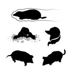 Silhouettes a mole vector