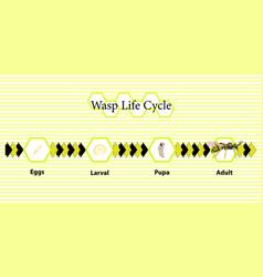 Wasp life cycle vector