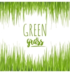 Set realistic green grass lawn vector image vector image