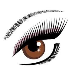 eye brown vector image