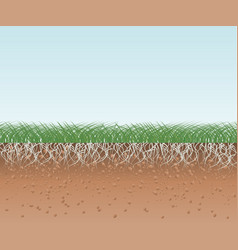 Grass with roots and soil vector