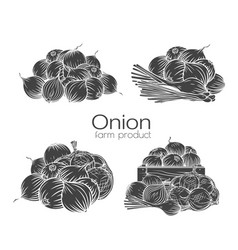 Onion bulbs glyph outline hand drawn engraved vector