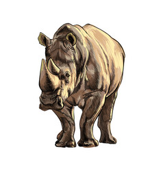 Rhinoceros from a splash watercolor colored vector