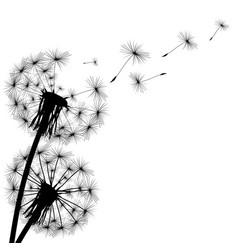 black silhouette of a dandelion vector image vector image