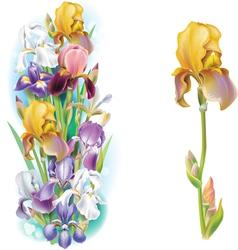 Garlands of Iris flowers vector image vector image
