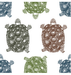 seamless pattern with hand drawn turtles vector image vector image