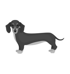 dachshund single icon in monochrome style vector image