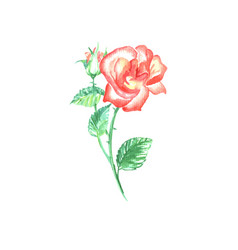 single red rose with green leaf vector image vector image