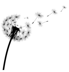 Black silhouette of a dandelion vector