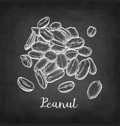 Chalk sketch peanut vector
