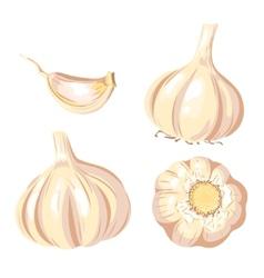 Garlic set vector