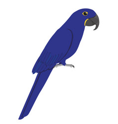 Anodorhynchus hyacinthinus - hyacinth macaw vector