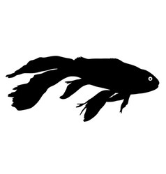 black silhouette of aquarium fish on white vector image