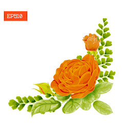 corner composition orange rose flowers with vector image