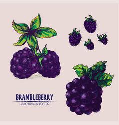 Digital detailed brambleberry vector