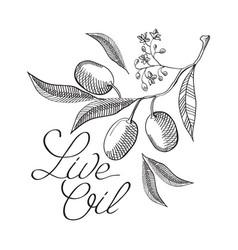 floral vintage live oil concept vector image vector image