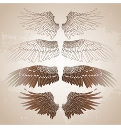 Graphic wings collection vector