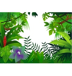 Tropical rain forest vector