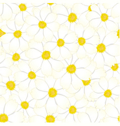 white cosmos flower seamless background vector image