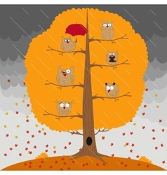 Owl sitting on an autumn tree in the rain vector image