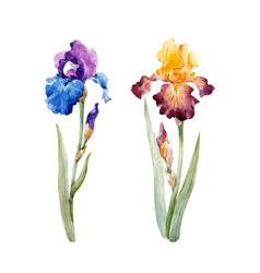 watercolor iris set vector image vector image