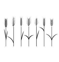 wheat field cereals icon set with rice wheat vector image vector image