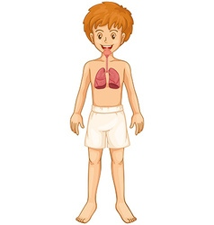 Boy and respiratory system vector