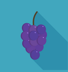 bunches of purple grapes icon in flat long shadow vector image