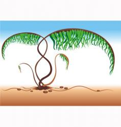 Native fern vector