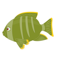 Tropical fish on white background vector image