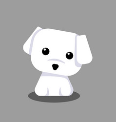 cute maltese white puppy cartoon for design vector image