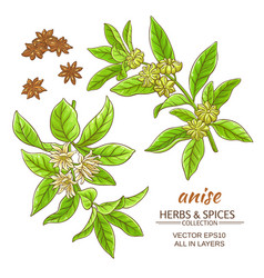 Anise set vector