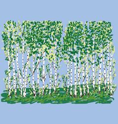 Birch grove in summer vector