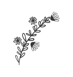 Gray scale branch contour with flowers vector