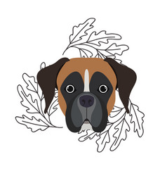 Head cute boxer dog on white background vector